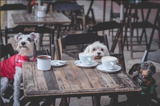 Café República. Foto: @LisaRoos