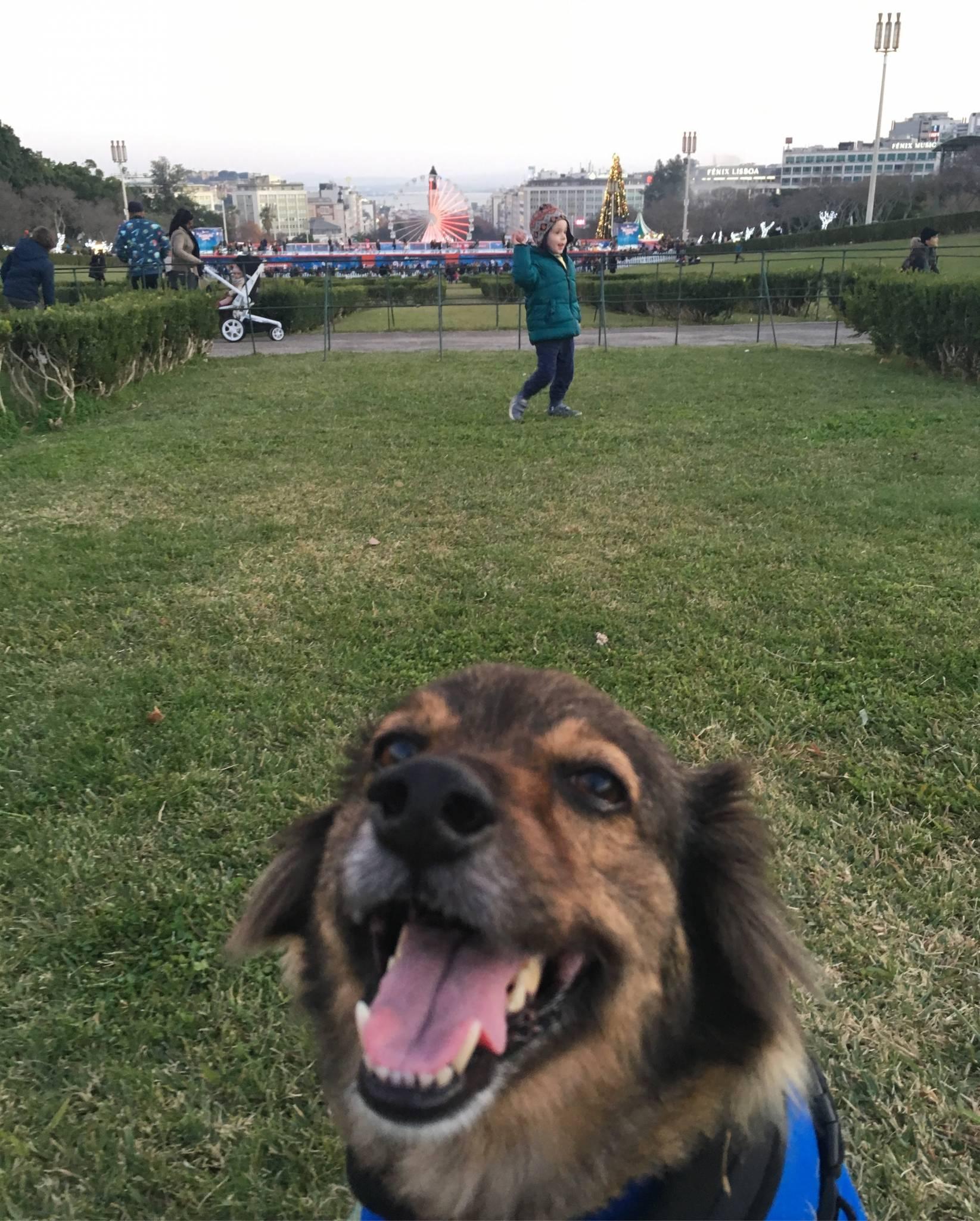 como trazer seu cão para Portugal