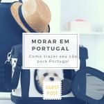 Como trazer seu cão do Brasil para Portugal
