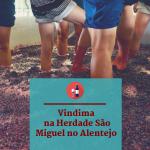 Vindimas na Herdade São Miguel no Alentejo